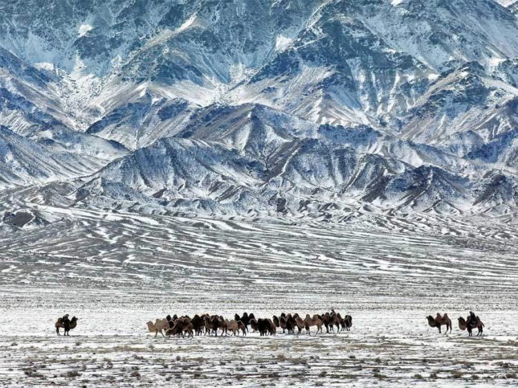 Gobi woestijn, Mongolië