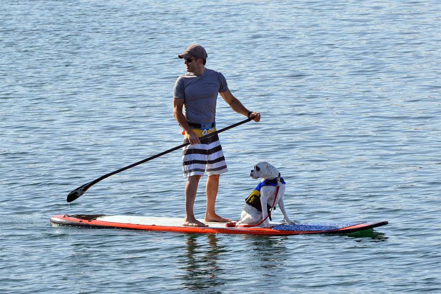 In Su'ruff Camp leert je hond surfen. © Lisette Lebaillif