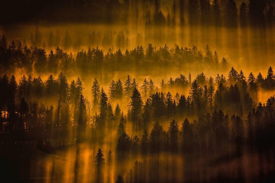 Hypnotiserende bossen1