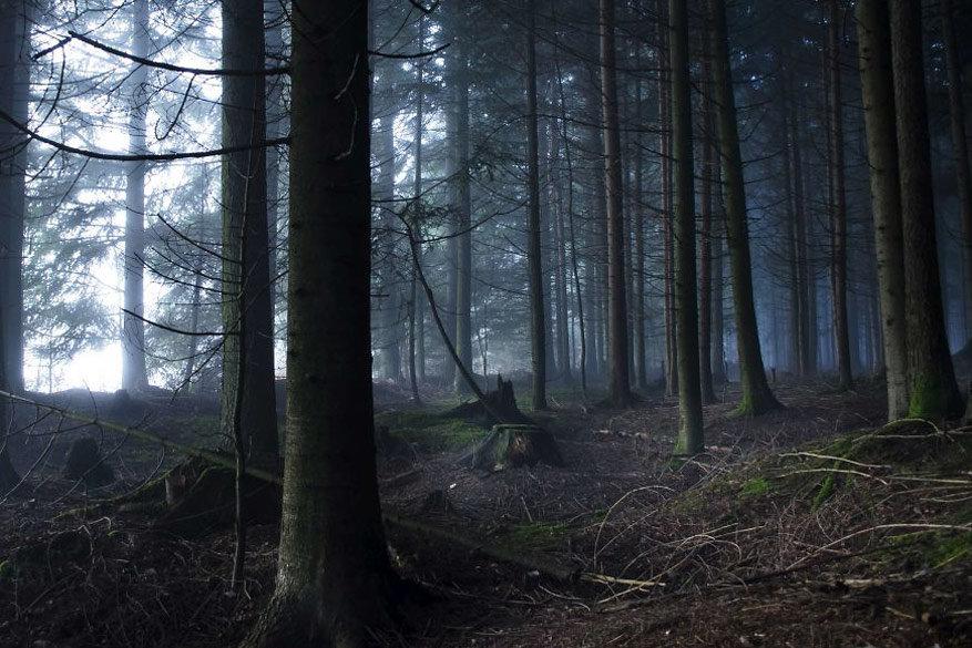 Hypnotiserende bossen11