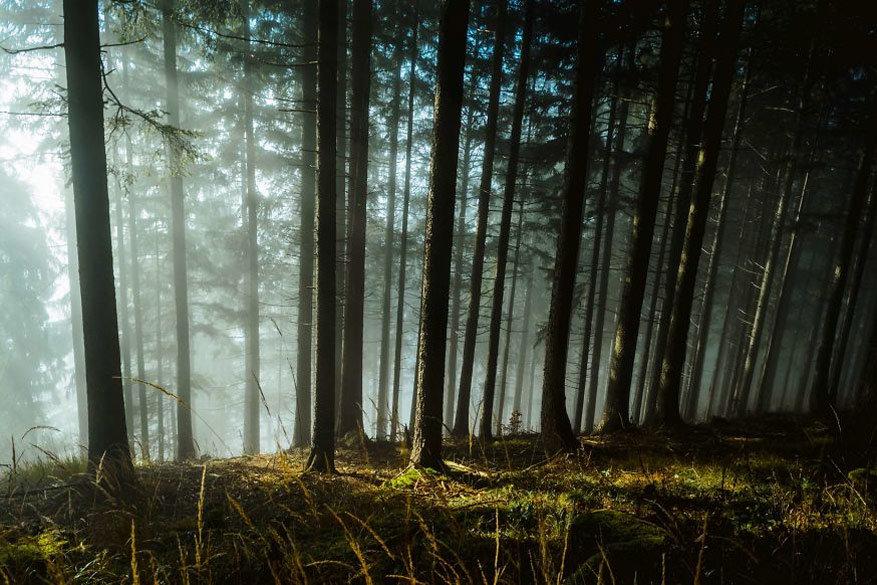 Hypnotiserende bossen12