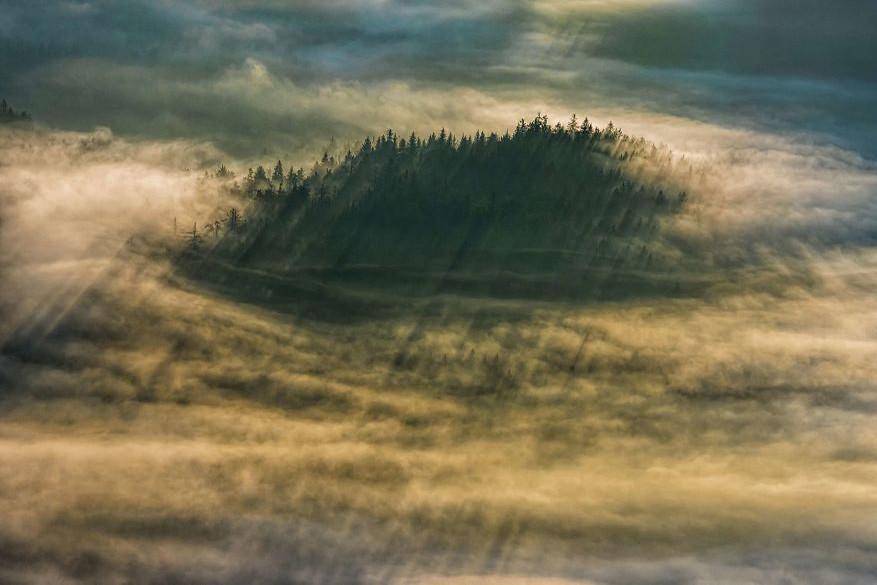 Hypnotiserende bossen14