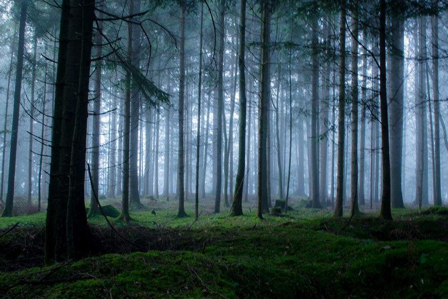 Hypnotiserende bossen15