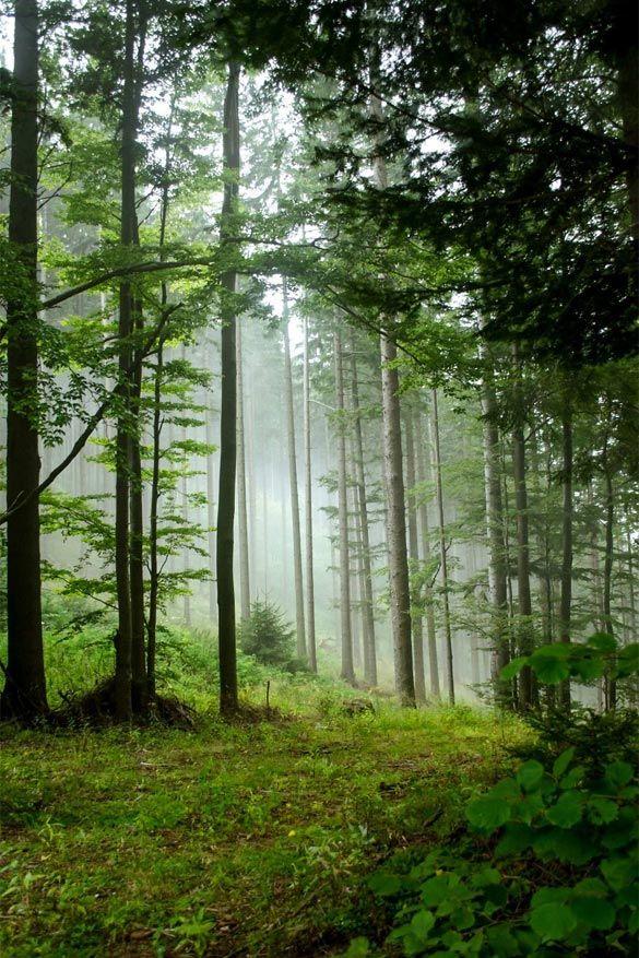 Hypnotiserende bossen2