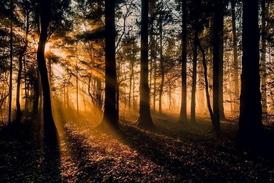 Hypnotiserende bossen3