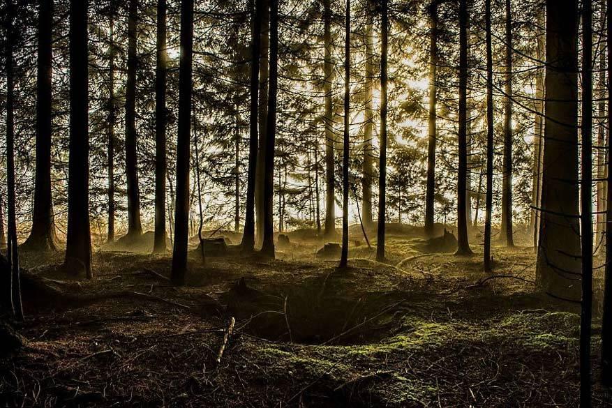 Hypnotiserende bossen6