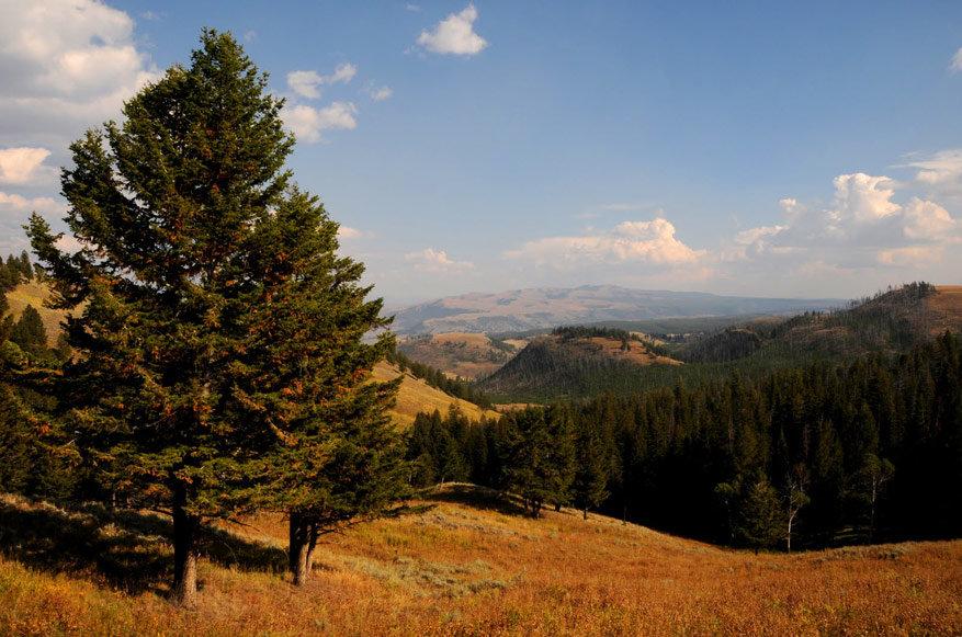 5-USA-Wyoming-Yellowstone-Park-36