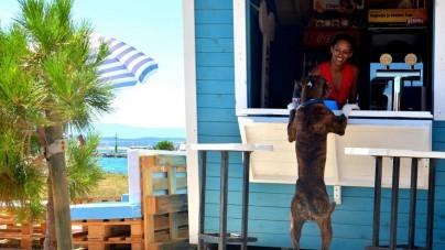 Geweldig: Kroatië opent strand speciaal voor honden