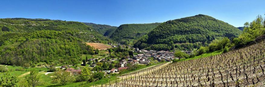 De wijngaarden van Cerdon