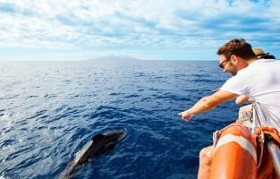 7. Spot dolfijnen en walvissen De permanente kolonie in de oceaan rond Tenerife telt 500 walvissen en 250 dolfijnen. Boottrips uit de havens van Los Cristianos, Colón en Los Gigantes brengen je dagelijks tot vlakbij de dieren, het hele jaar door.