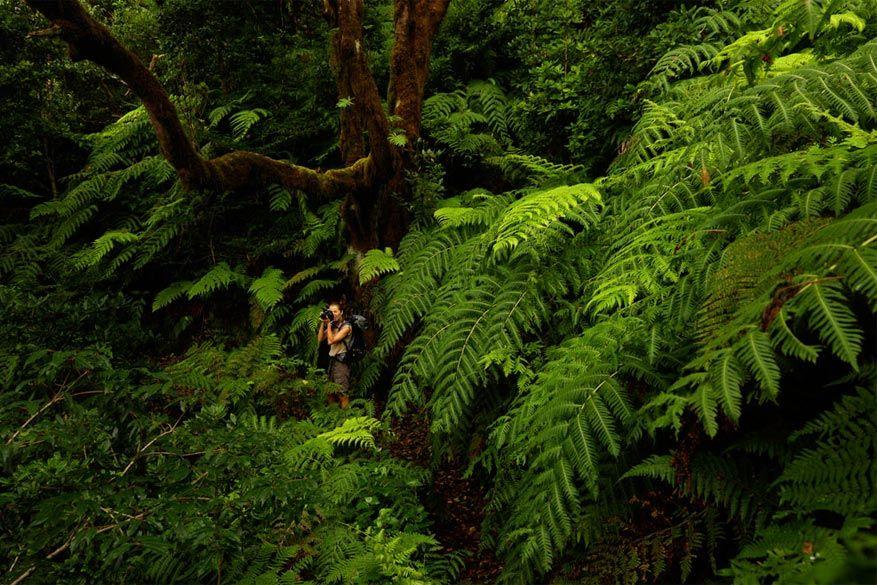 9 tips om tenerife actief te beleven reisreporter for Botanische tuin tenerife