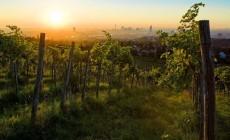 Een weekend tussen de wijngaarden in Wenen