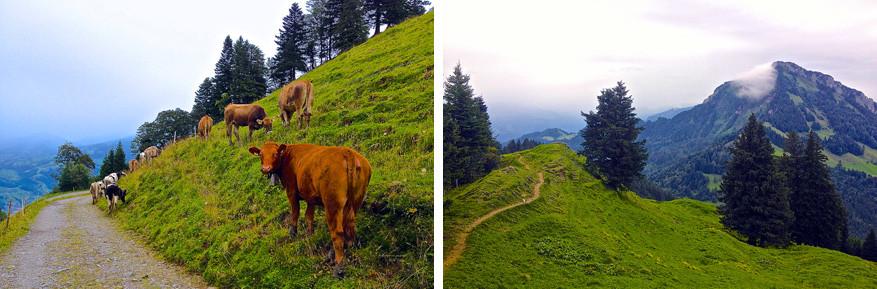 Wandelen op de Waldstätterweg. © Steven Loockx