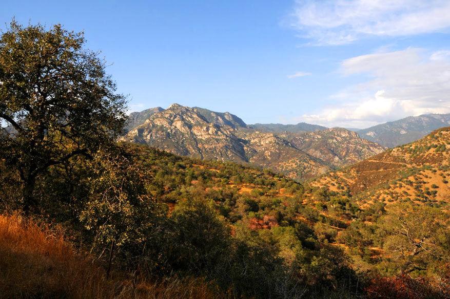 3.-Sequoia-NP2