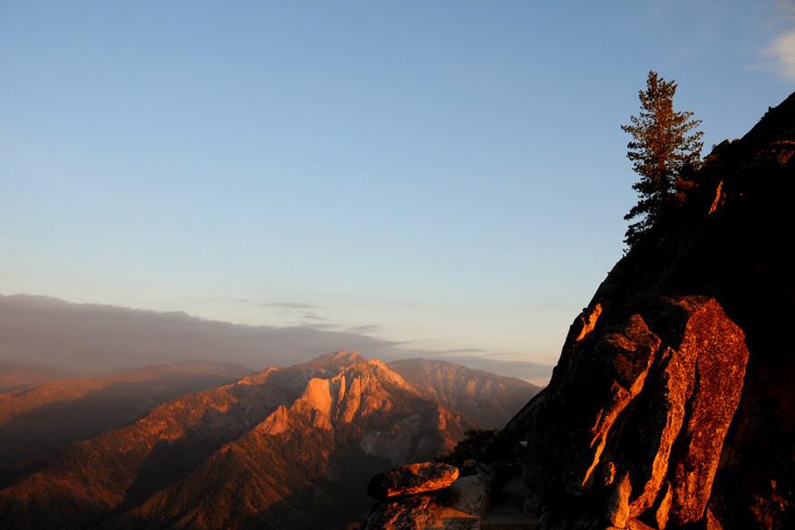 3.-Sequoia-NP3