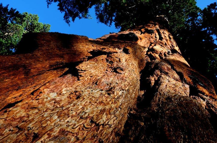 3.-Sequoia-NP6