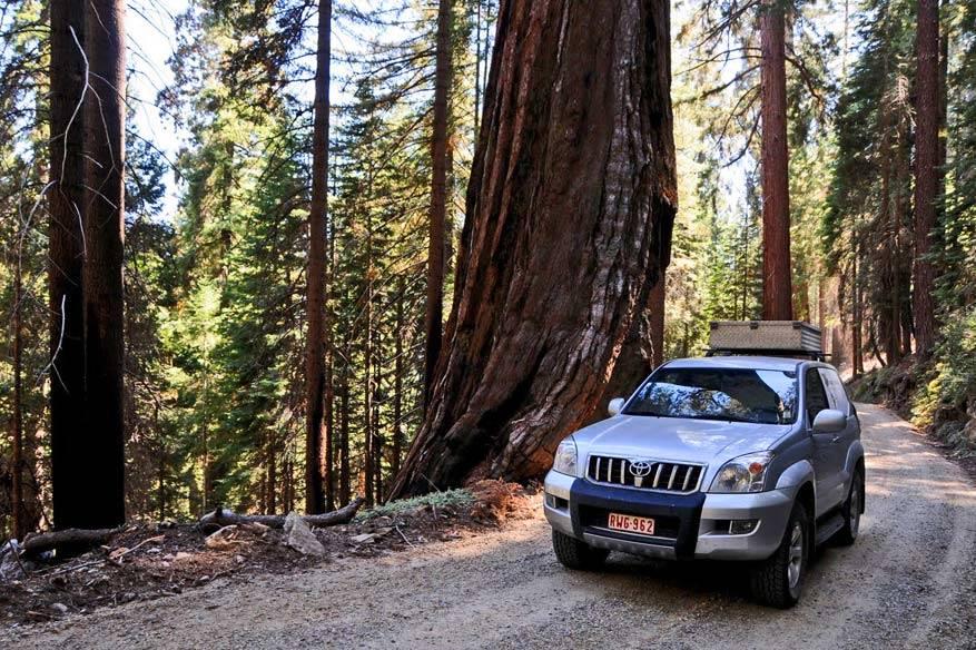 3.-Sequoia-NP8