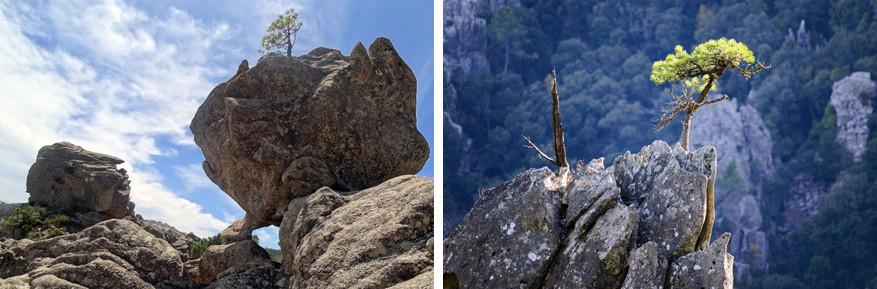 De indrukwekkende rotsen in het woud van Ospedale. © Marc Kenis | © Thierry Tramoni