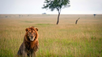 Safarisharing laat je een Afrikaanse safari delen
