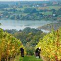 slovenia-boerderij