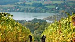 Bijzonder logeren op een Sloveense toeristenboerderij