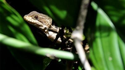 Roadtrip langs natuurscenes in Amerika: de fauna en flora van Costa Rica