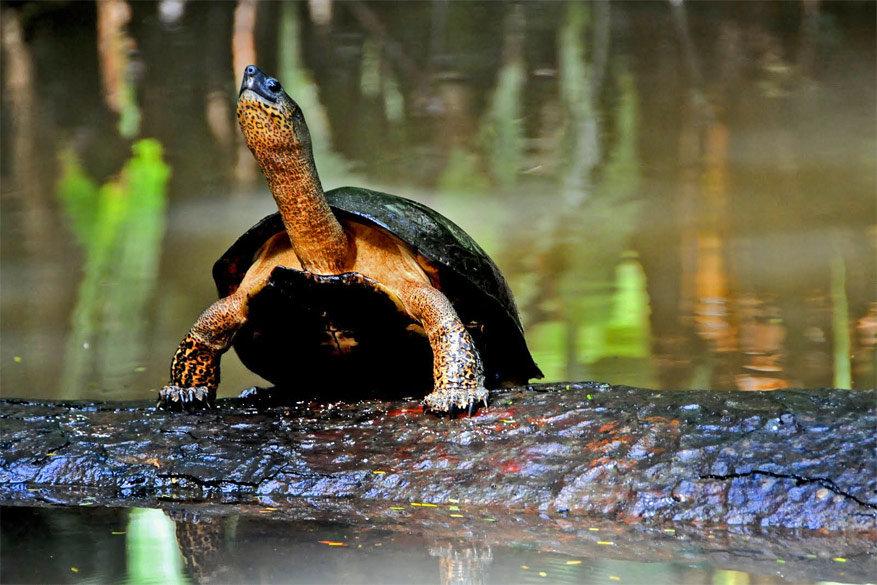 1-parque-nacional-tortuguero6