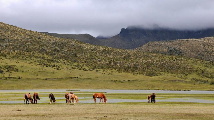3-parque-nacional-cotopaxi1