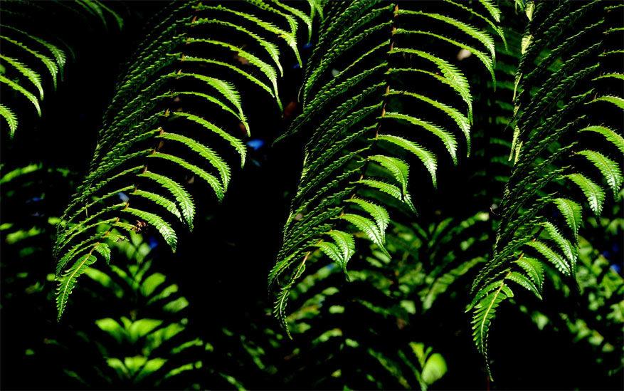 6-reserva-biologica-monteverde2
