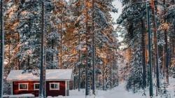 Volgende krokusperiode rechtstreeks naar Fins en Noors Lapland