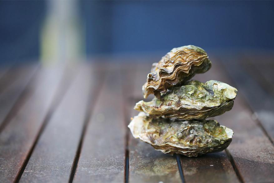 Gesloten oesters