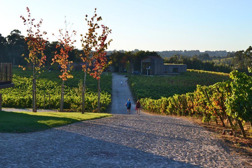 Alle gebouwen zijn verbonden met wandelpaden tussen de wijngaarden