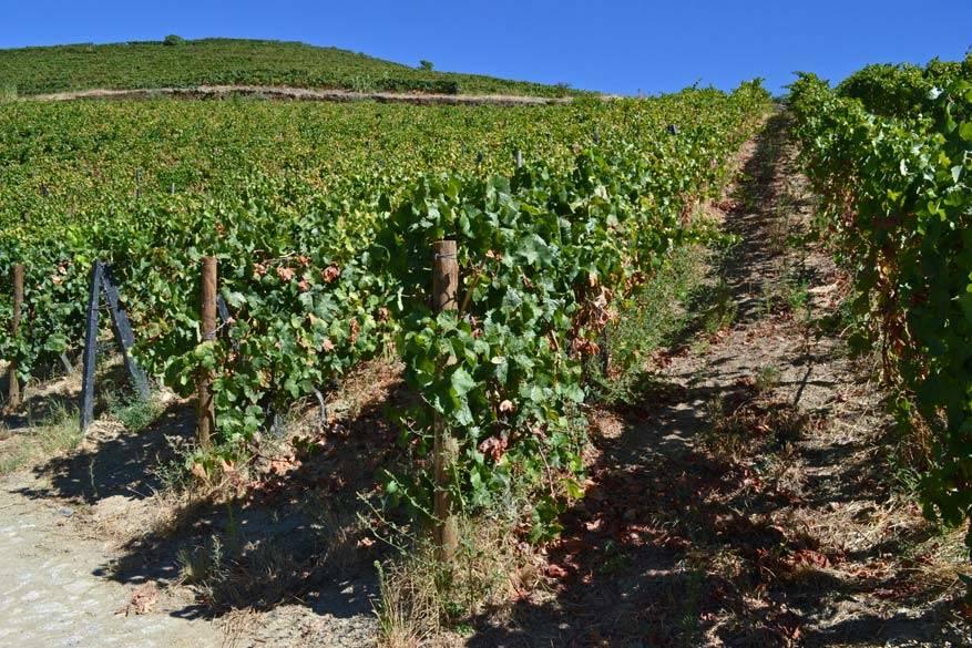 Quinta Nova beschikt over 85 hectare wijngaarden
