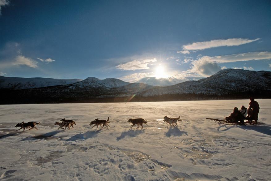 In Zweeds Lapland kan je sleeën met honden!