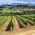 catalonie-wijn2