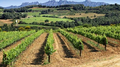 10 redenen om het wijnlandschap in Catalonië te ontdekken