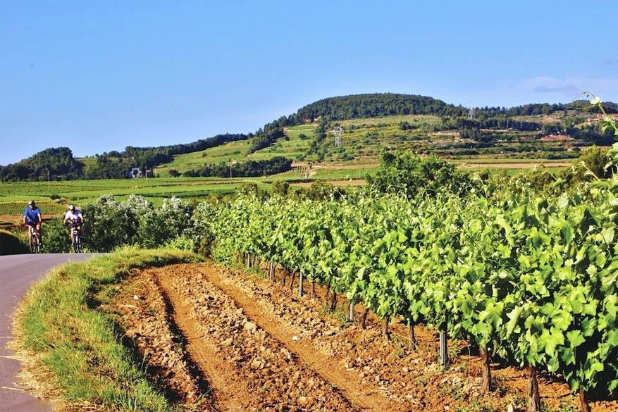 De wijngaarden bereik je makkelijk met de fiets, al wandelend of zelfs te paard.