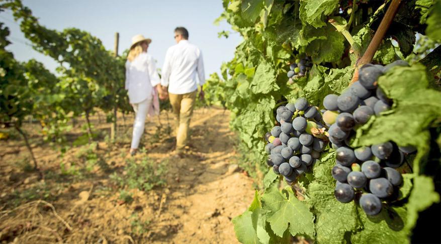 Maak de wijnervaring compleet met een actieve druivenpluksessie.