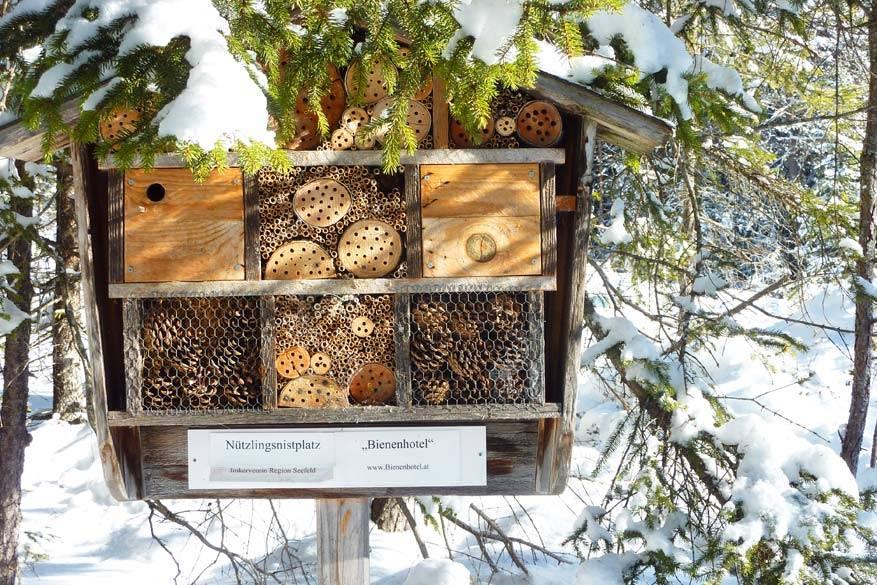 Gespot onderweg: een winters bijenhotel. © Bruno Loockx