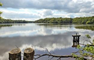 Strek de benen in Sologne: meer en meer mensen zijn op zoek naar de ideale plek om ongestoord van de natuur te kunnen genieten. Sologne, in de regio Centre-Val de Loire, is daarvoor uitstekend geschikt. In het natuurgebied maak je talloze wandelingen door de bossen en langs de oevers van de verschillende meren. Wie het graag wat specialer wil, kan met de organisatie 'Walk in Sologne' zelfs gaan wandelen in de meren! © David Templier