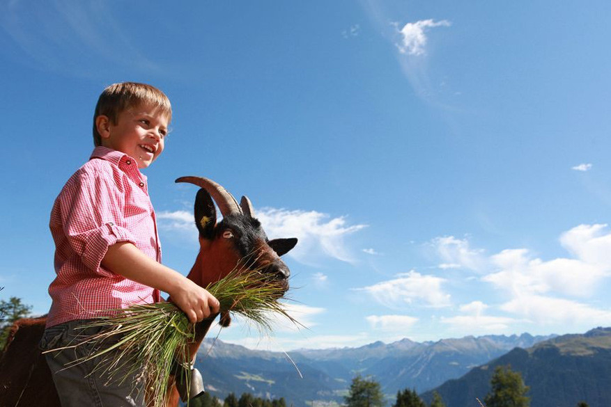 Kinderen helpen geiten voederen op de Alp Tigignas. © Savognin Toerisme