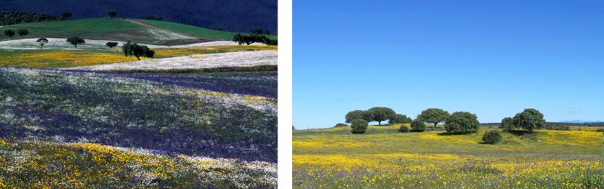 Alle seizoenen brengen heel wat mooie kleuren met zich mee in de Alentejo.