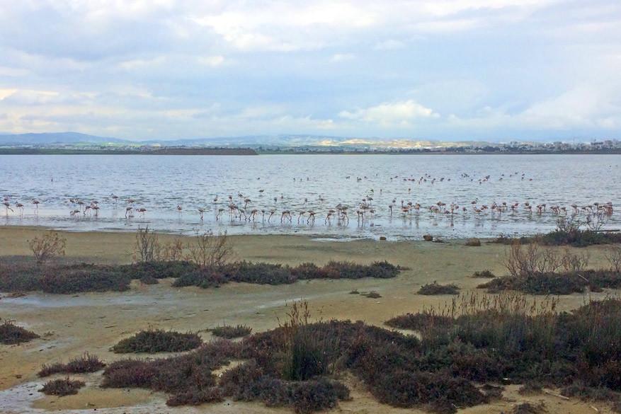 Roze Flamingo's aan het meer van Larnaka heten ons welkom!
