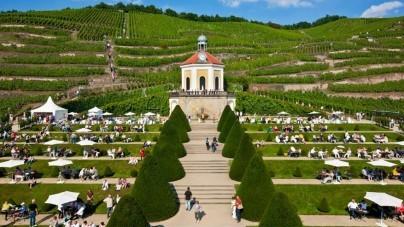 Wijn beleven langs de Elbe op de Saksische Wijnwandelweg