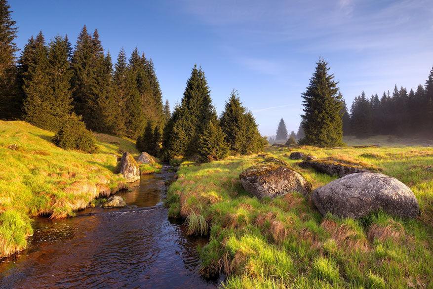 Het nationaal park Šumava.