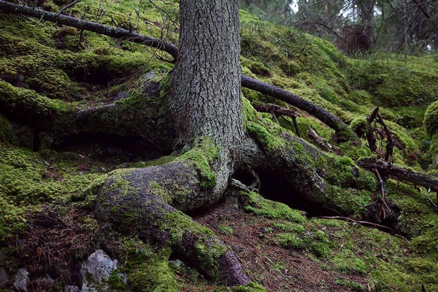 friluftsliv in ongerepte oerbossen