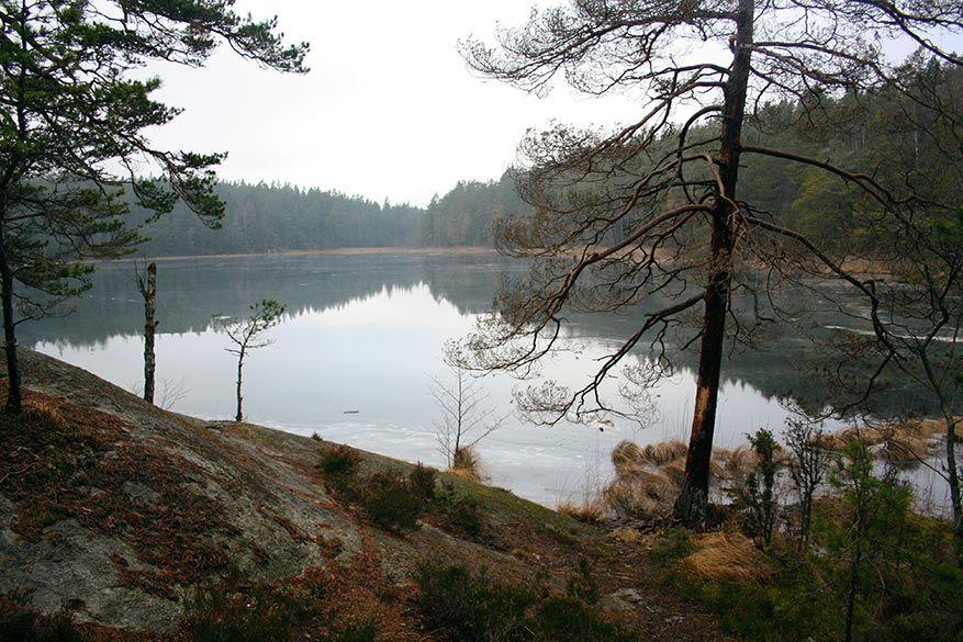 Eindeloze meren en naaldbossen in Tyresta
