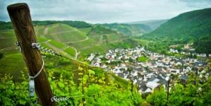 Wandelen, wijnproeven en wellness in Duitse Ahrtal