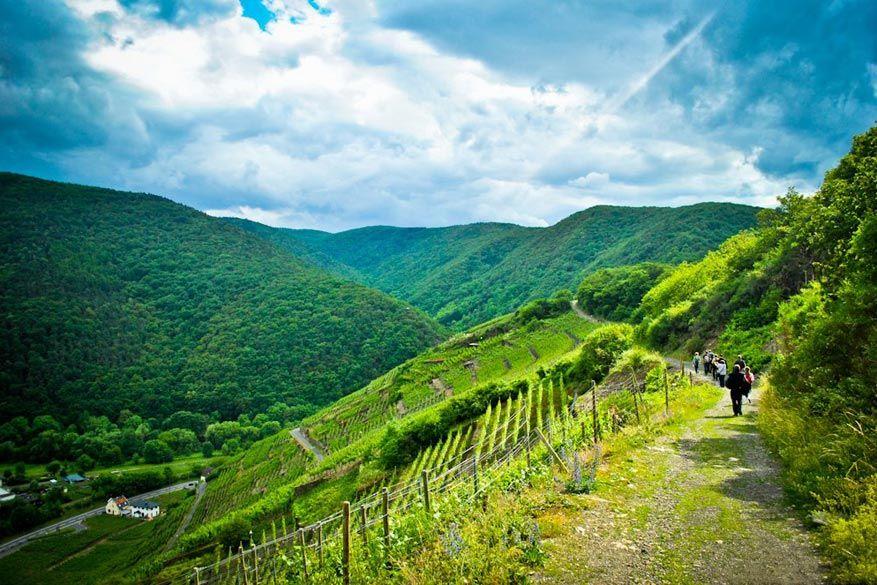 Tijdens de wandelingen ben je omsingeld door wijnstokken.