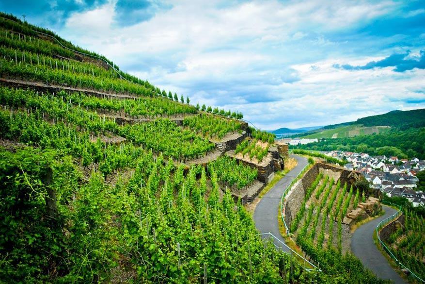 Ongelooflijk hoe ze elke meter benutten met wijngaarden.